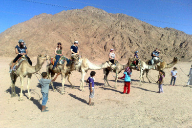 Camel Ride Sharm el Sheikh