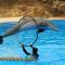 Dolphin Show Sharm El Sheikh