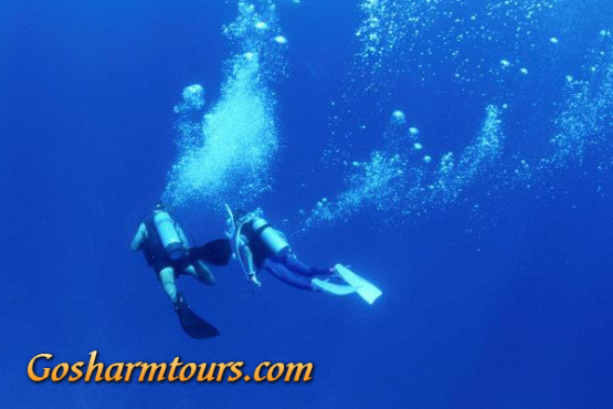 Intro Dive Course Sharm el Sheikh