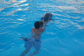 Swimming with Dolphins Sharm el Sheikh